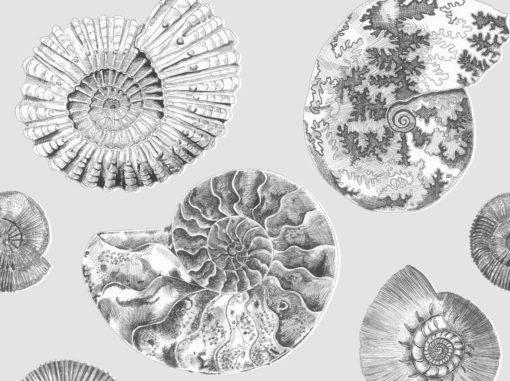 Fossilium simpukkatapetti Voyage| Sisustusstudio Vitriini