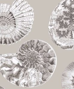 Fossilium tapetti Silpukkakuvio Voyage Sisustusstudio Vitriini