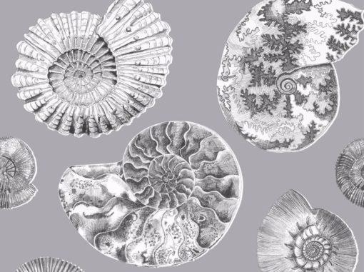 Fossilium tapetti simpukka Voyage Sisustusstudio Vitriini